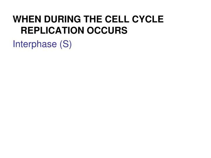 WHEN DURING THE CELL CYCLE REPLICATION OCCURS