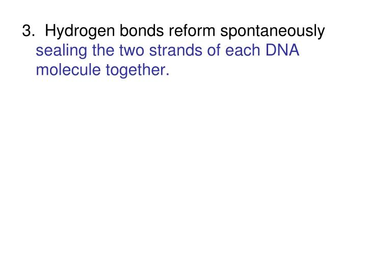 3.  Hydrogen bonds reform spontaneously