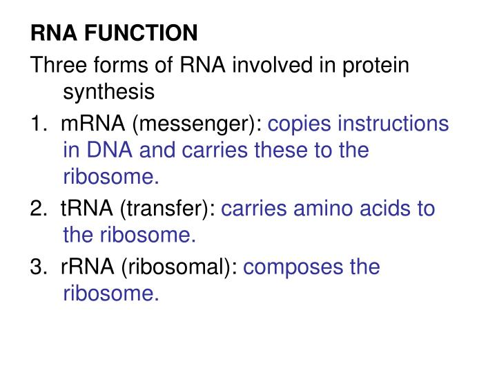 RNA FUNCTION
