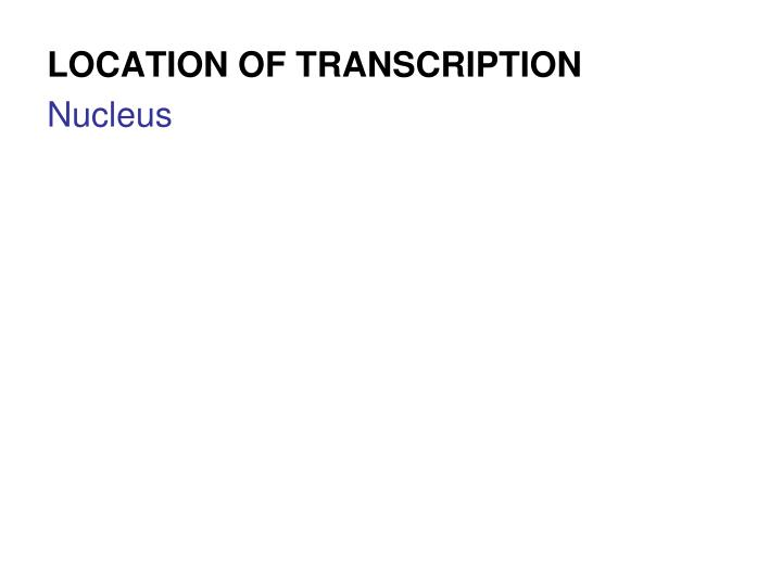 LOCATION OF TRANSCRIPTION