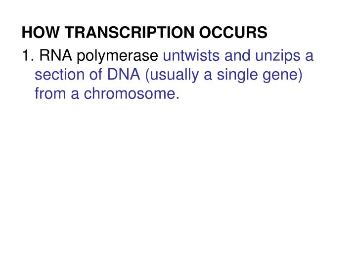 HOW TRANSCRIPTION OCCURS