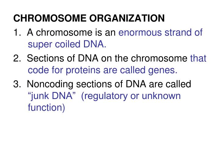 CHROMOSOME ORGANIZATION