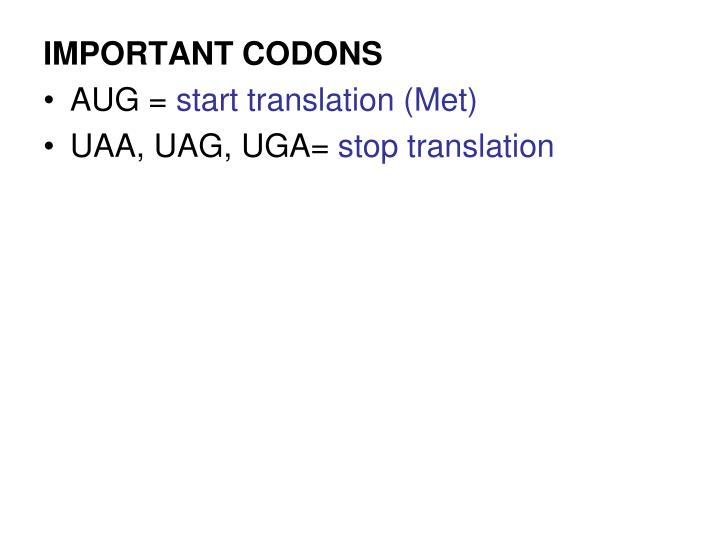 IMPORTANT CODONS