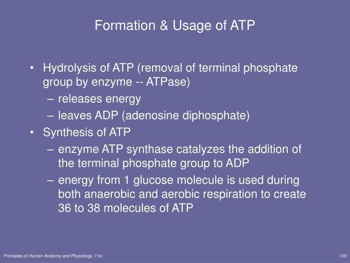 Formation & Usage of ATP
