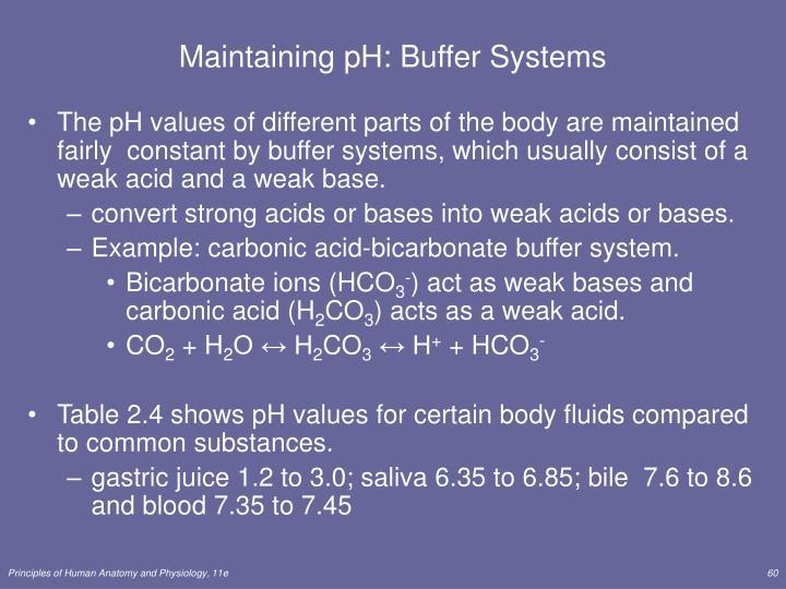 Maintaining pH: Buffer Systems