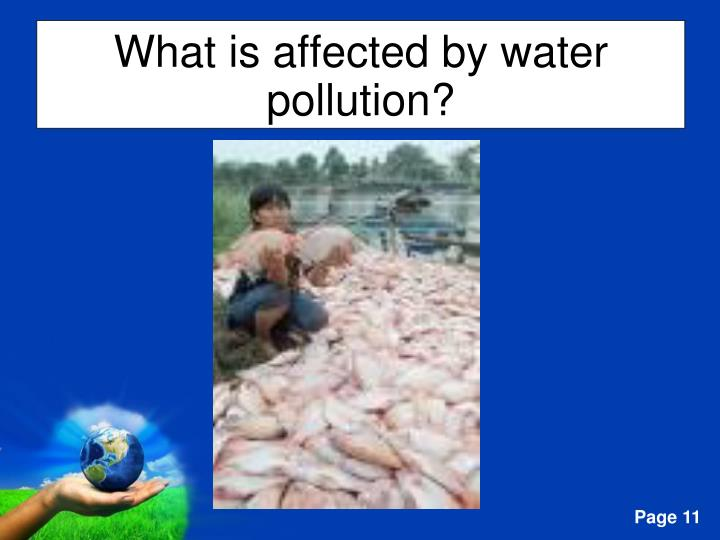 What is affected by water pollution