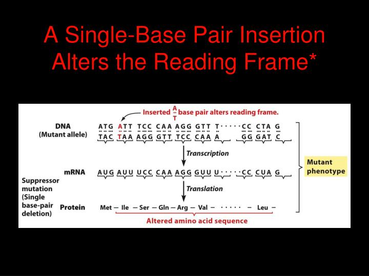 A Single-Base Pair Insertion Alters the Reading Frame*