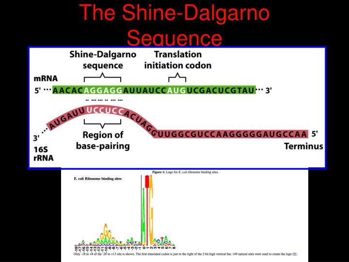 The Shine-Dalgarno Sequence