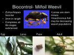 biocontrol milfoil weevil