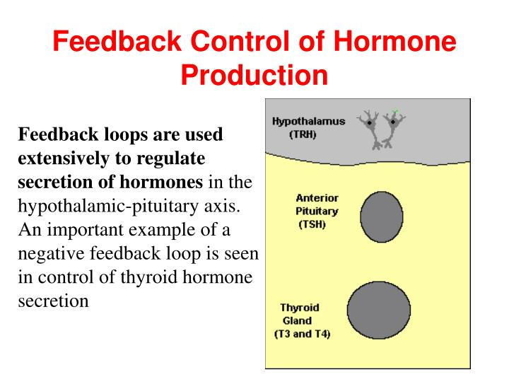 Feedback Control of Hormone Production