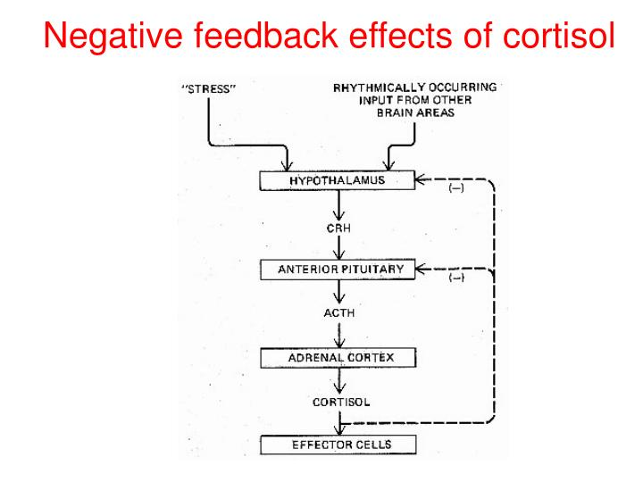 Negative feedback effects of cortisol