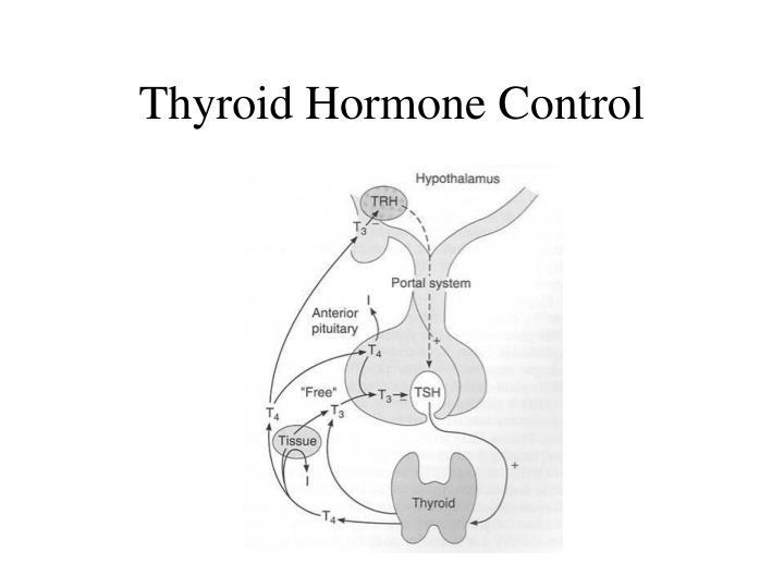 Thyroid Hormone Control