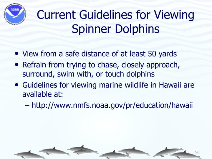 Current Guidelines for Viewing Spinner Dolphins