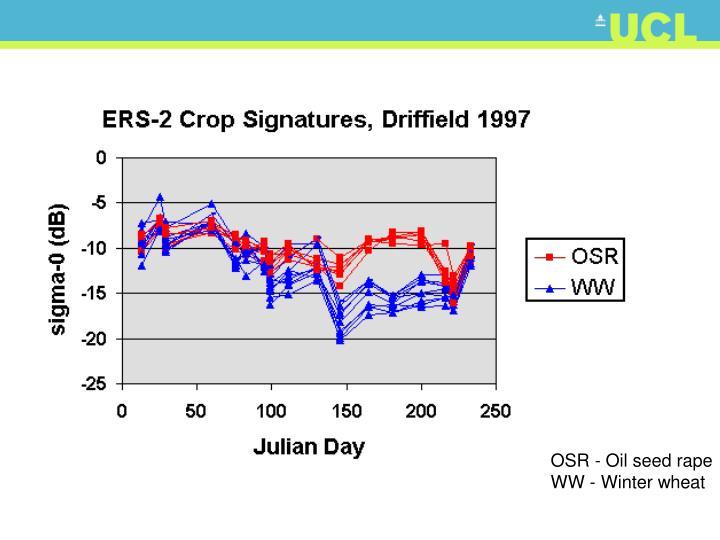 OSR - Oil seed rape