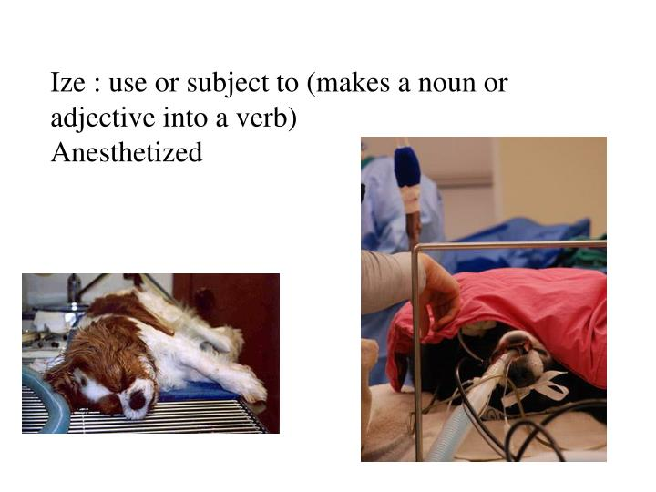 Ize : use or subject to (makes a noun or adjective into a verb)