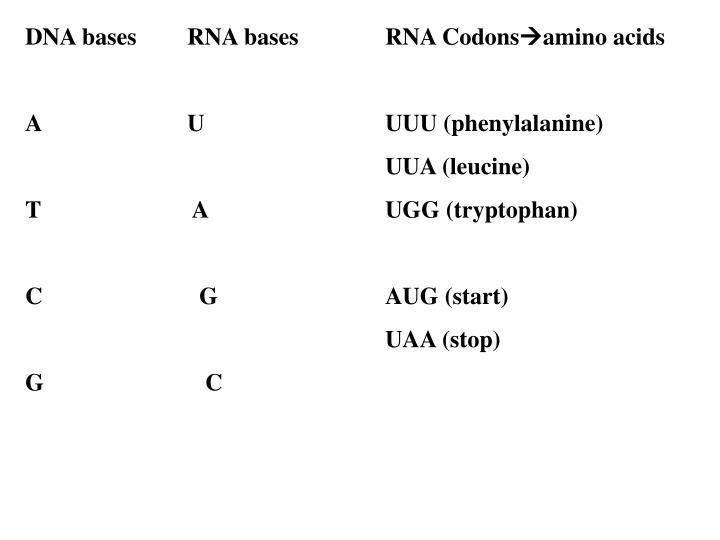 DNA bases   RNA basesRNA Codons