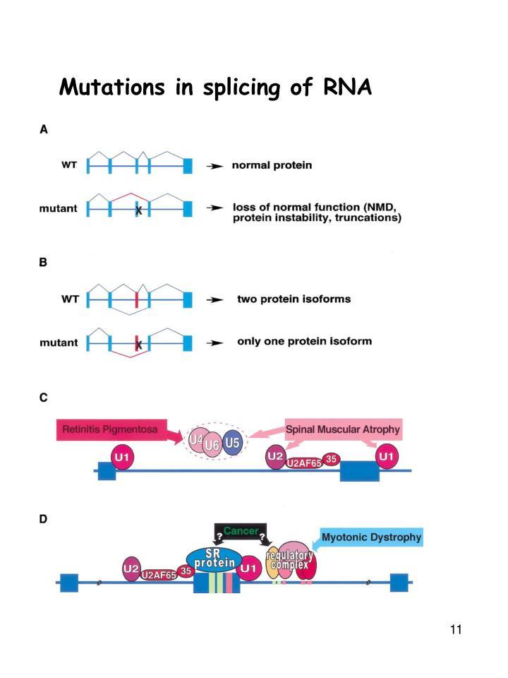 Mutations in splicing of RNA