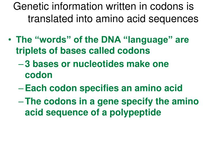 Genetic information written in codons is translated into amino acid sequences