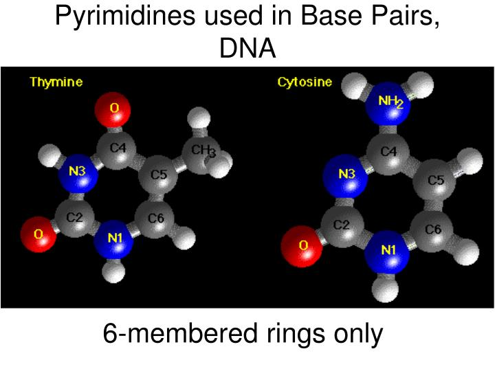 Pyrimidines used in Base Pairs, DNA