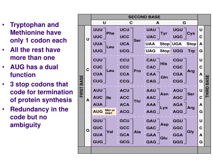 Tryptophan and Methionine have only 1 codon each