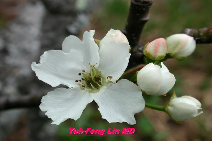 Yuh-Feng Lin MD