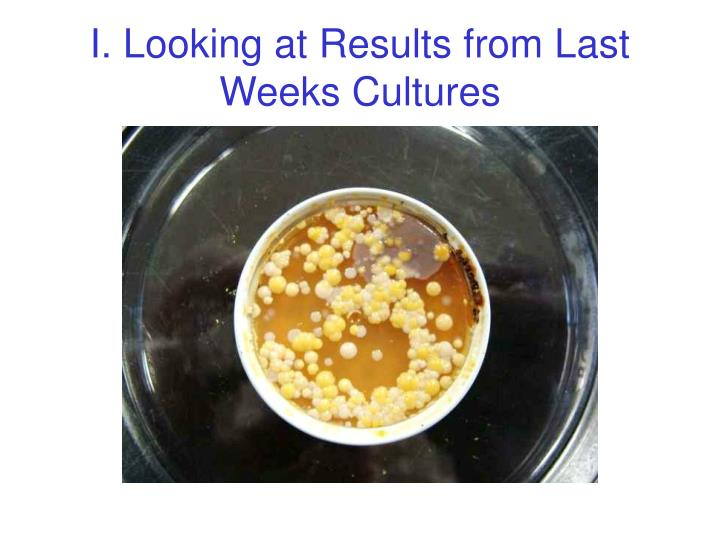 I. Looking at Results from Last Weeks Cultures