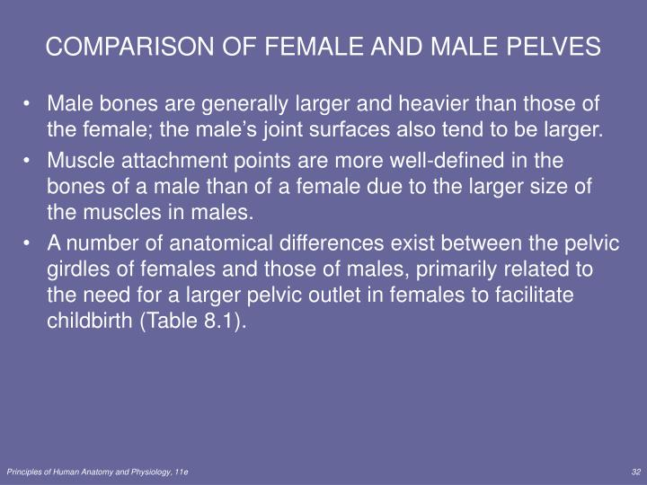 COMPARISON OF FEMALE AND MALE PELVES