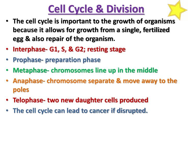Cell Cycle & Division