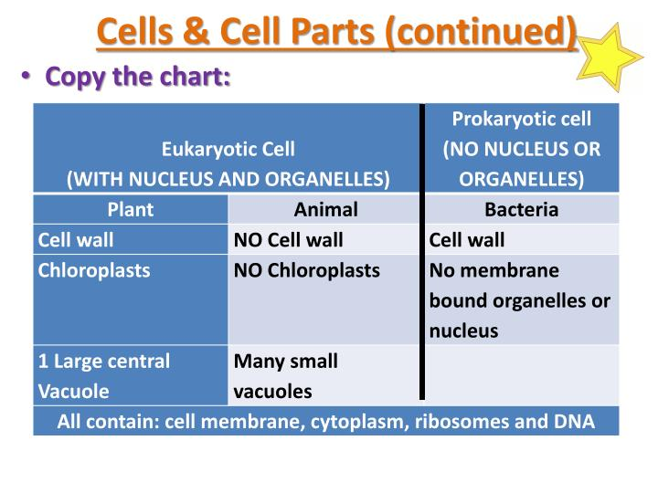 Cells & Cell Parts (continued)