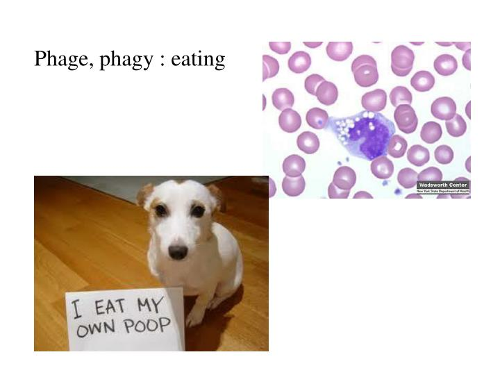 Phage, phagy : eating