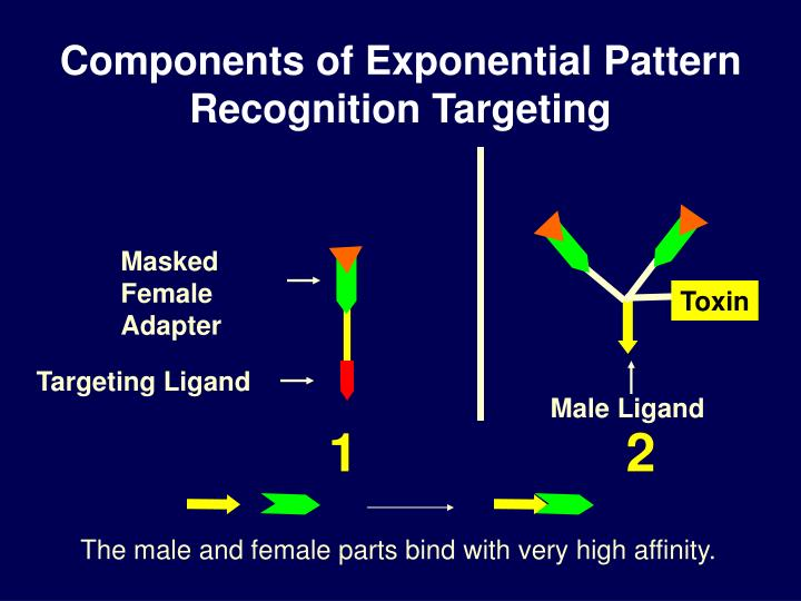 Components of Exponential Pattern Recognition Targeting