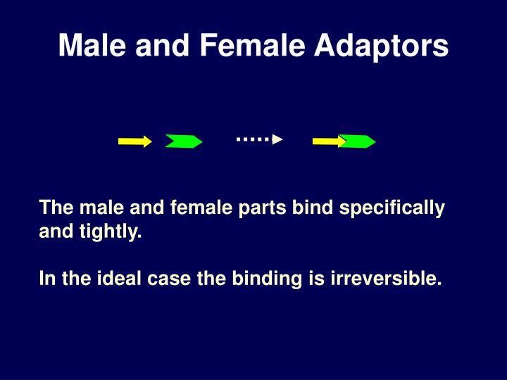 Male and Female Adaptors