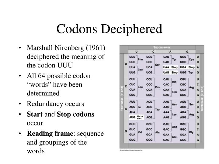 Codons Deciphered