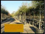 plant material quality and planting methods