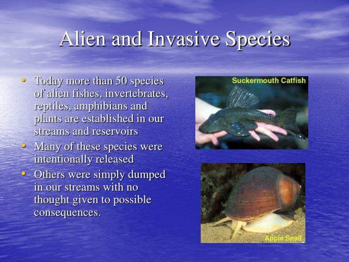 Today more than 50 species of alien fishes, invertebrates, reptiles, amphibians and plants are established in our streams and reservoirs