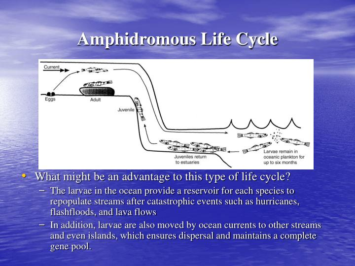 Amphidromous Life Cycle
