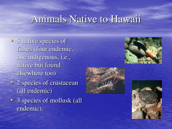 5 native species of fishes (four endemic, one indigenous, i.e., native but found elsewhere too)