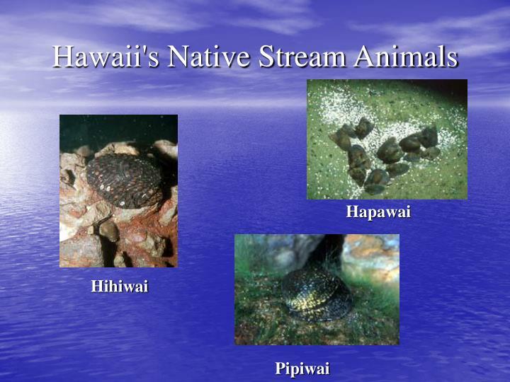 Hihiwai