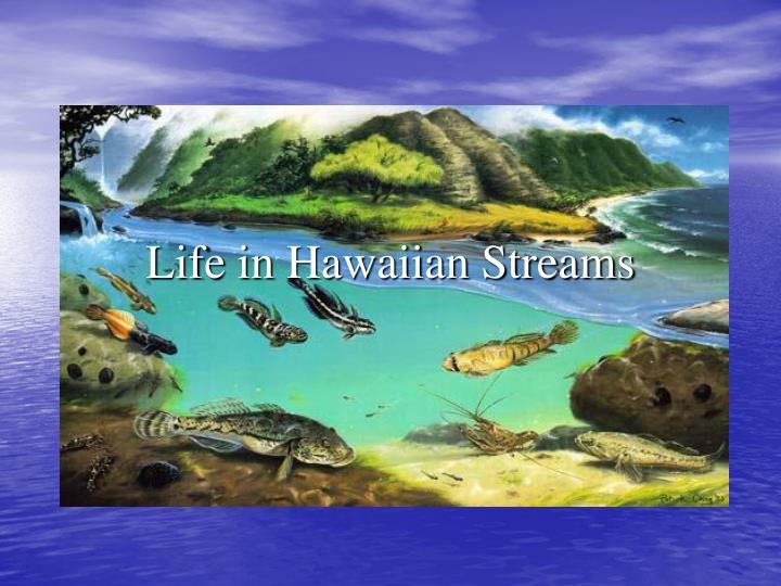 Life in Hawaiian Streams