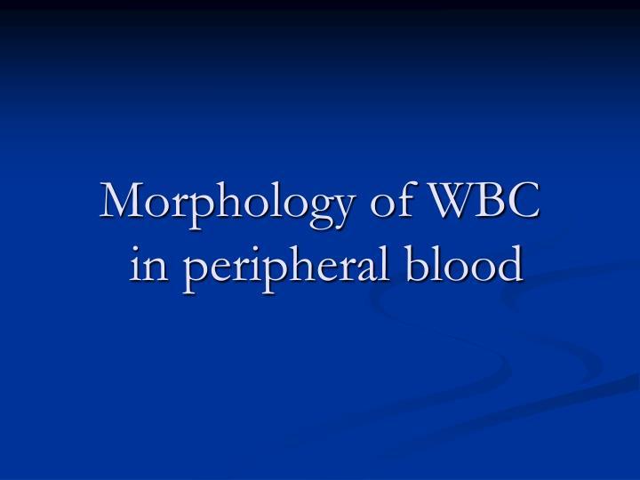 Morphology of WBC