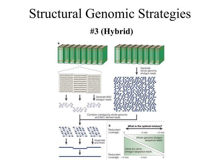Structural Genomic Strategies