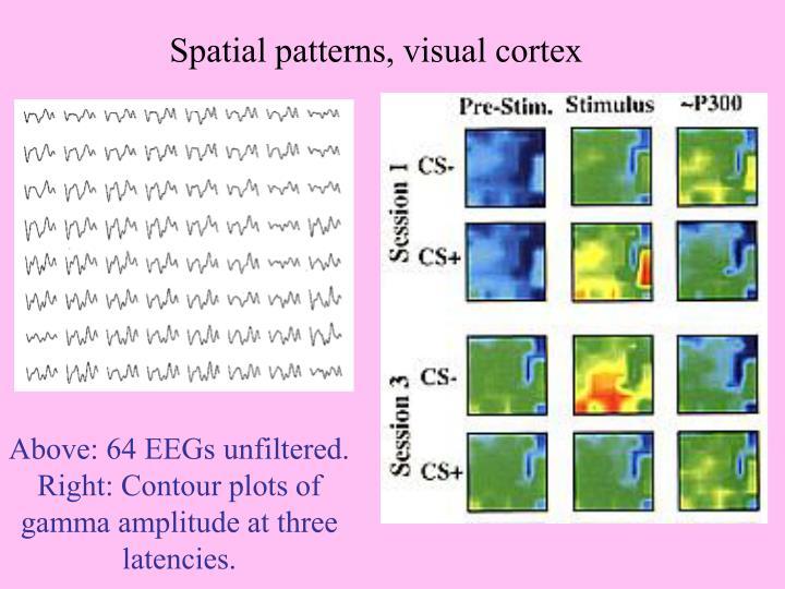 Spatial patterns, visual cortex