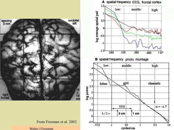 Spatial spectrum of the gyri-sulci & EEG