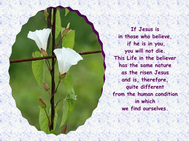 If Jesus is