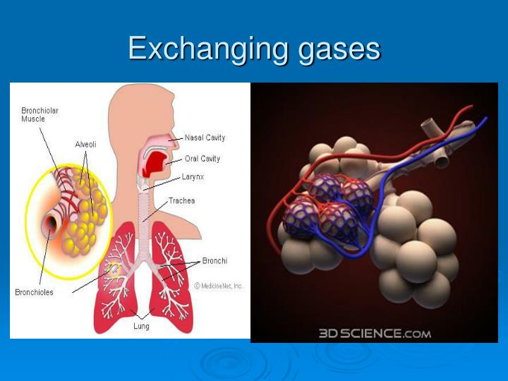 Exchanging gases