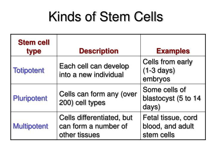 Kinds of Stem Cells