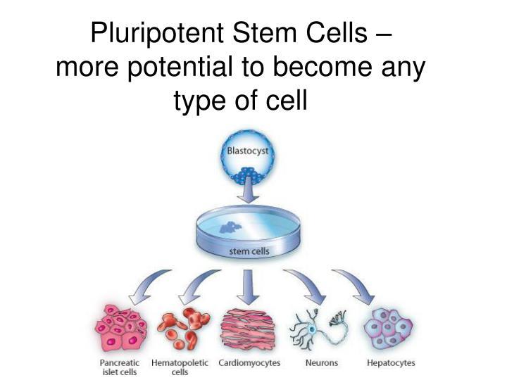 Pluripotent Stem Cells –