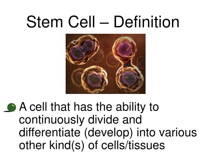 Stem Cell – Definition