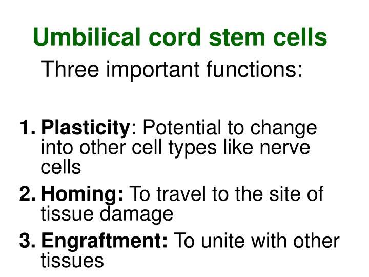 Umbilical cord stem cells