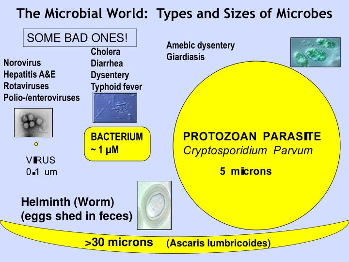 The Microbial World:  Types and Sizes of Microbes